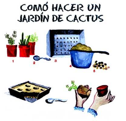 Cómo hacer un jardín de cactus
