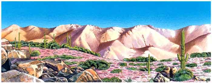 Esta es la imagen de un desierto. Se ve que hace mucho calor, el suelo es muy árido, hay cactus de diferentes tipos.