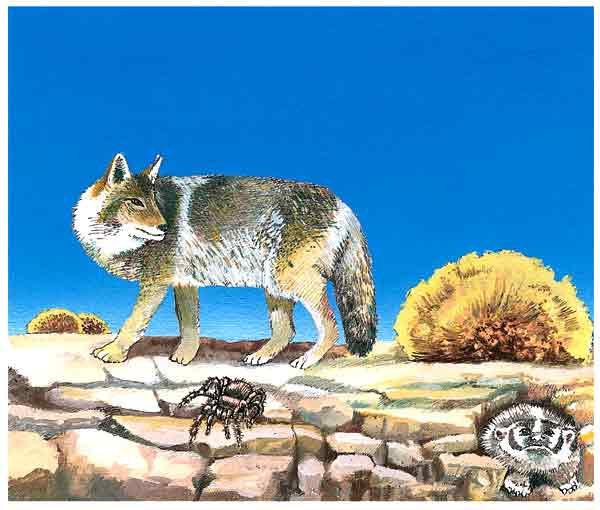 Aquí vemos que tipo de animales hay en el desierto. Una tarántula, un coyote y un armadillo.