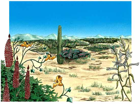 tipos de plantas anuales del desierto el lupino, el lirio del desierto