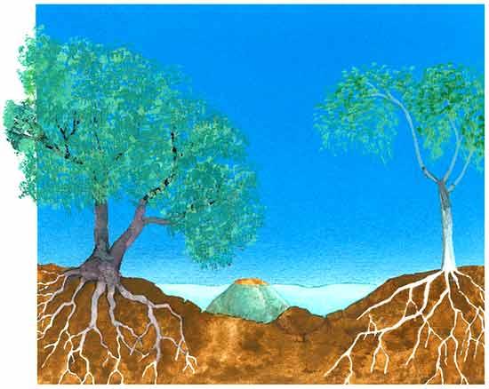 Desierto for Arboles para sombra de poca raiz