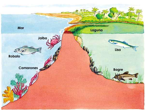 Animales Que Viven En Las Lagunas
