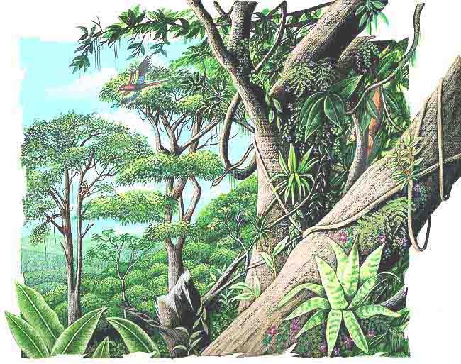 slo de la selva tropical hmeda y la selva baja que abarcan parte de
