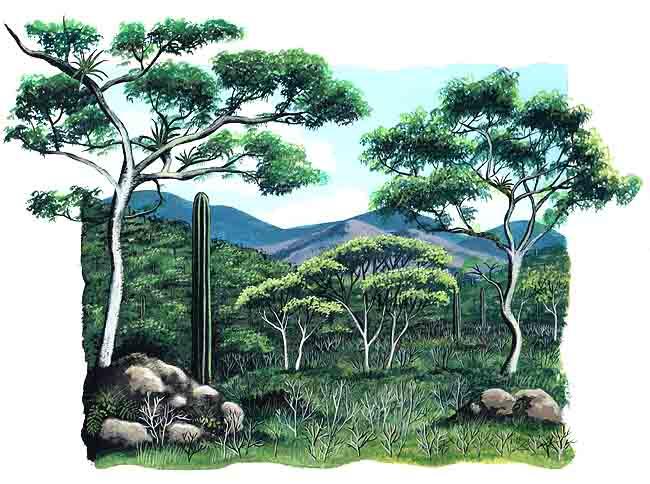 es la imagen de un selva baja En Mxico existen este tipo de selvas en