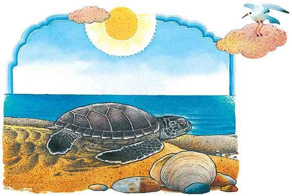 Dibujo tortugas marinas - Imagui
