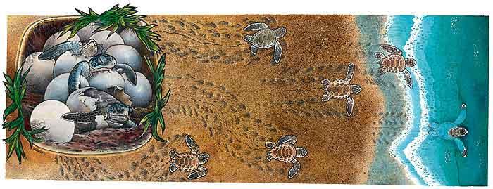 Las tortugas de mar