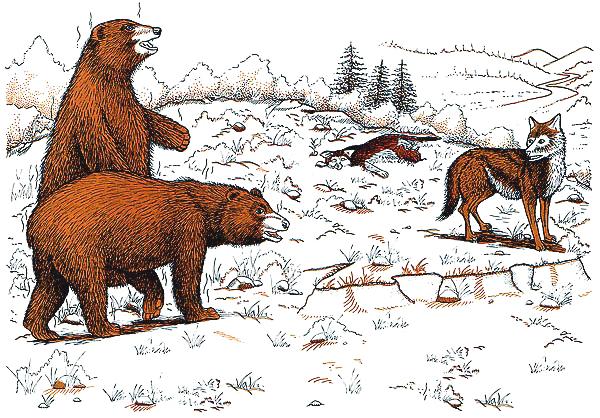 Los osos apestosos