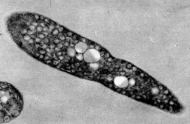Ii Metabolismo Bacteriano