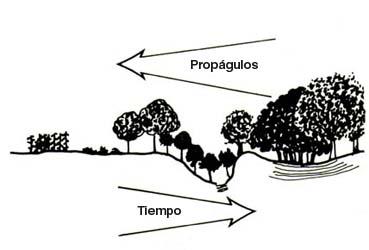Iii Degradacion Y Destruccion De Ecosistemas