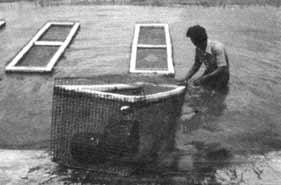 Iii piscicultura for Jaulas flotantes para piscicultura