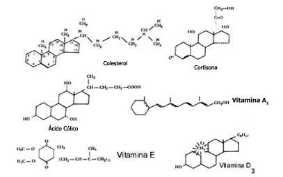 I Las Moléculas Y Las Células