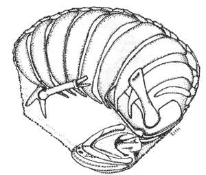 http://bibliotecadigital.ilce.edu.mx/sites/ciencia/volumen3/ciencia3/144/img/i1p17.jpg
