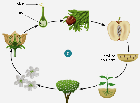 Libro de ciencias i nfasis en biolog a telesecundaria for Planta ornamental que se reproduzca por esquejes